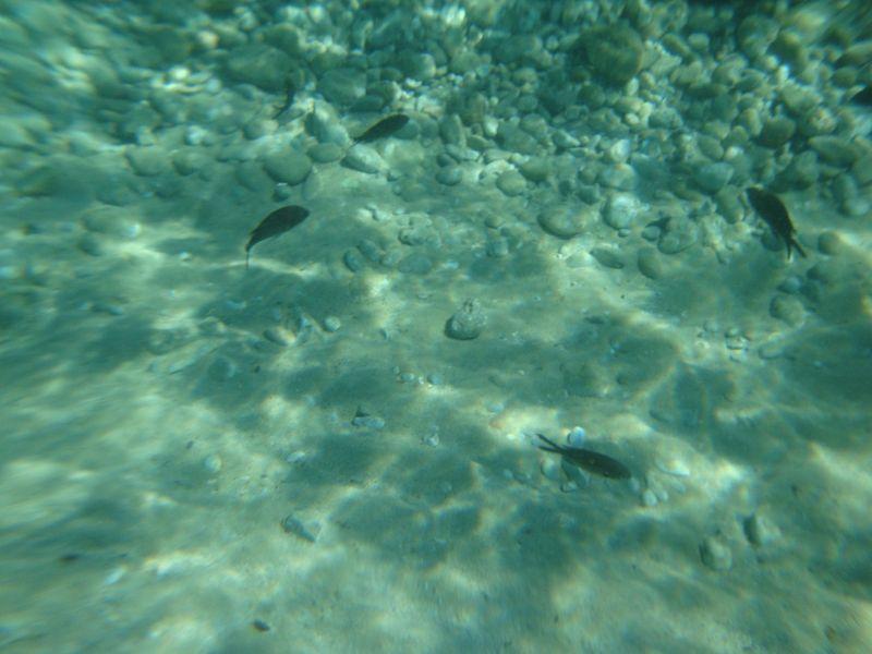 019. Четырехугольник черных рыбок -