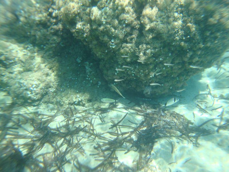021. Косяк рыбок - Лимнонари (Λιμνονάρι)