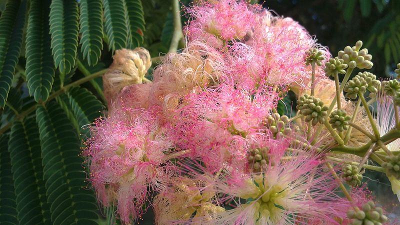033. Экзотические «кудрявые» цветы -