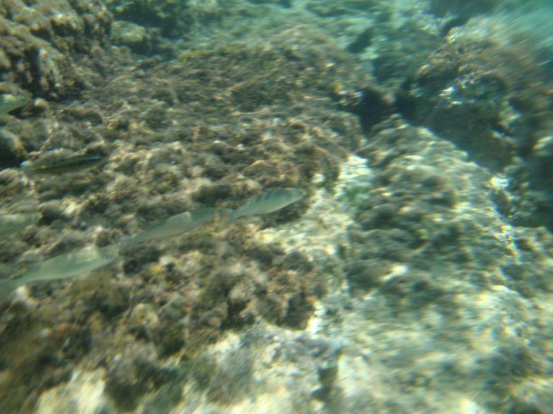 049. Одна за другой - Рыбки в Панормосе (Πάνορμος)