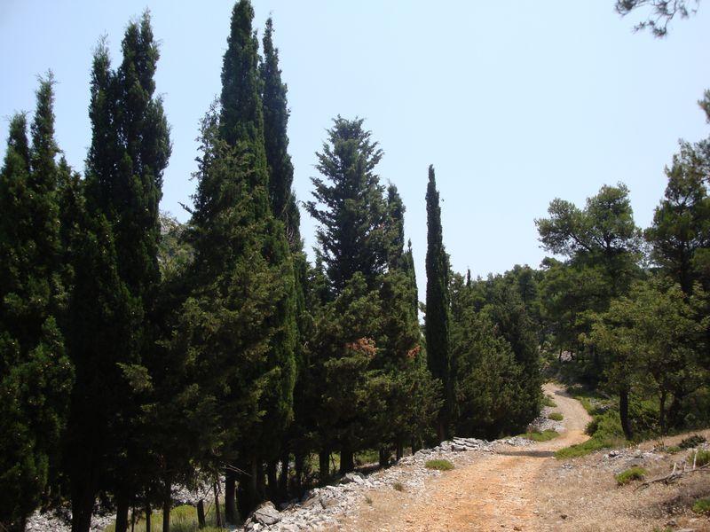 066. Хорошо сохранившаяся дорога - В окружении кипарисов на горе Дельфи (Δέλφη)