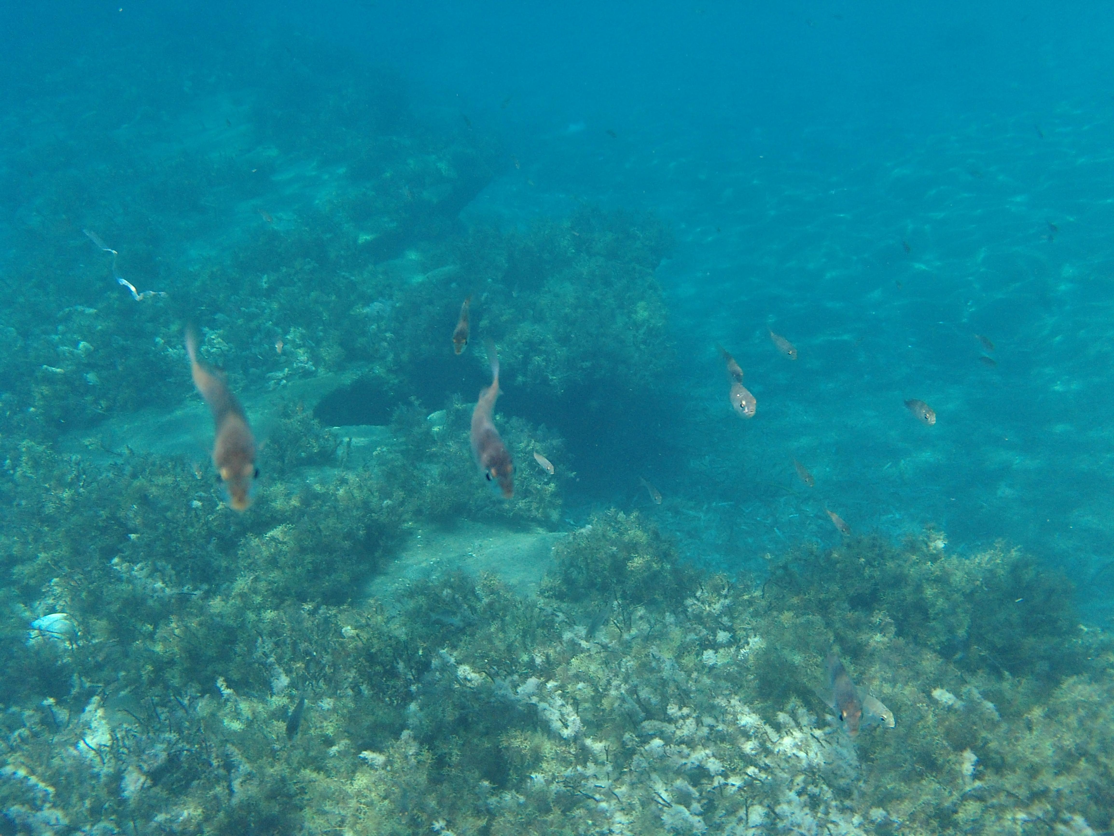 53. Подводный мир Периссы - Санторини