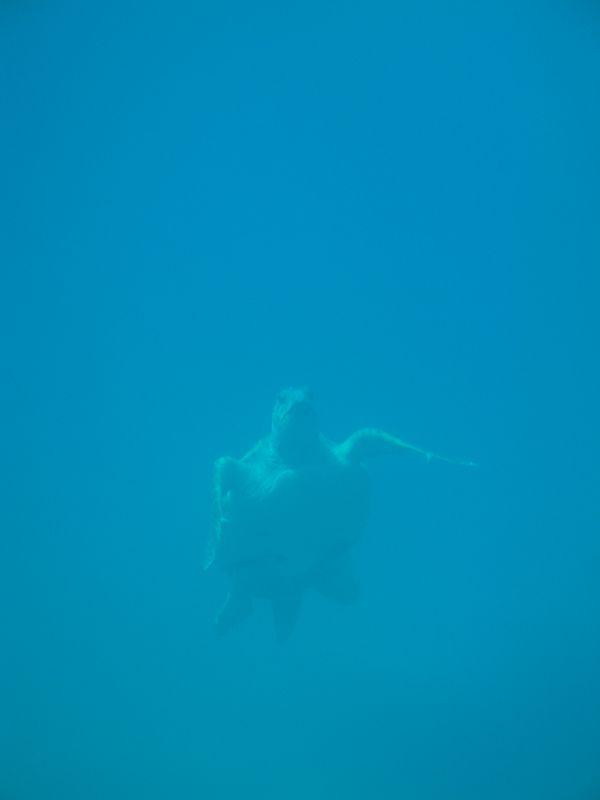 """05. Подышу-ка я воздухом! - Морская черепаха """"Caretta-Caretta"""". Фотография с подводной лодки """"Капитан Немо""""."""
