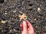 09. Морская звездочка - Морская звезда, выброшенная приливом на берег и спасенная!