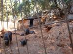 16. Кабанчики - Каменный парк Аскос (Ασκός Πέτρινο Πάρκο)
