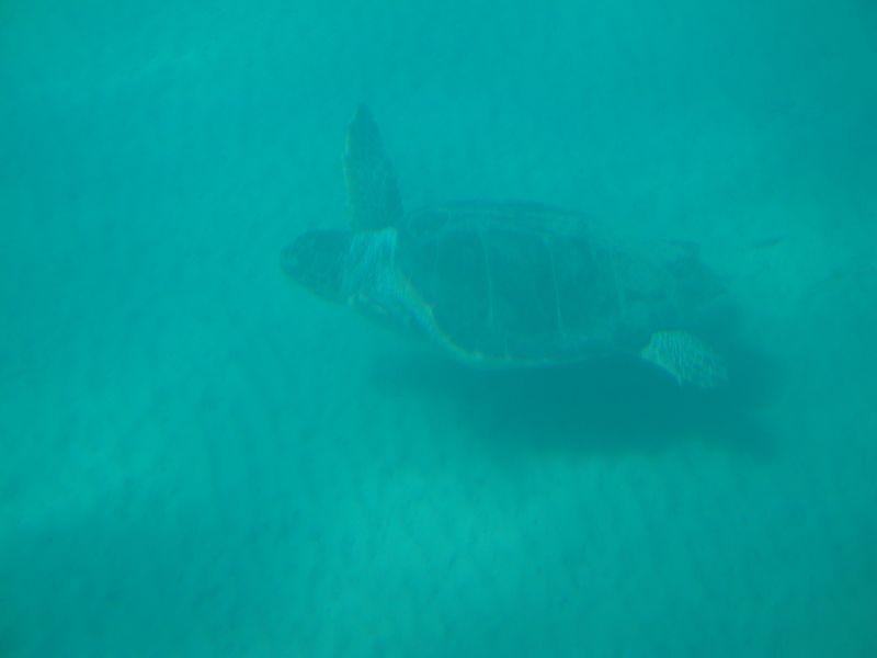 """42. Черепаха Caretta-Caretta - Морская черепаха на дне. Вид с подводной лодки """"Капитан Немо"""""""
