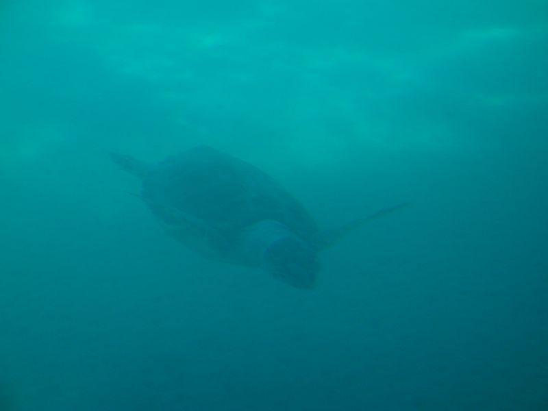 """43. Полное погружение - Морская черепаха опускается на дно. Вид с подводной лодки """"Капитан Немо"""""""