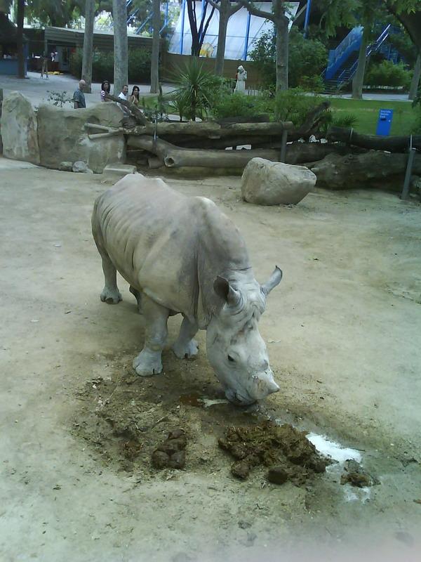 034. Обед носорога - Носорог кушает с большим аппетитом