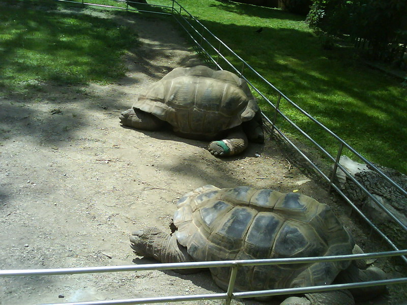 036. Очень большие черепахи - Барселонский зоопарк