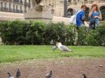 070. Обед чайки - А вот еще один пример кровожадности - на глазах изумленной толпы одной из главных площадей Барселоны чайка съела голубя
