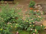 076. Клумба в парке Salou - Похожие цветы видели и в Греции, Salou (Салоу)