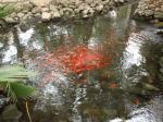 077. Рыбки - Маленький городской парк в городе Salou (Салоу)