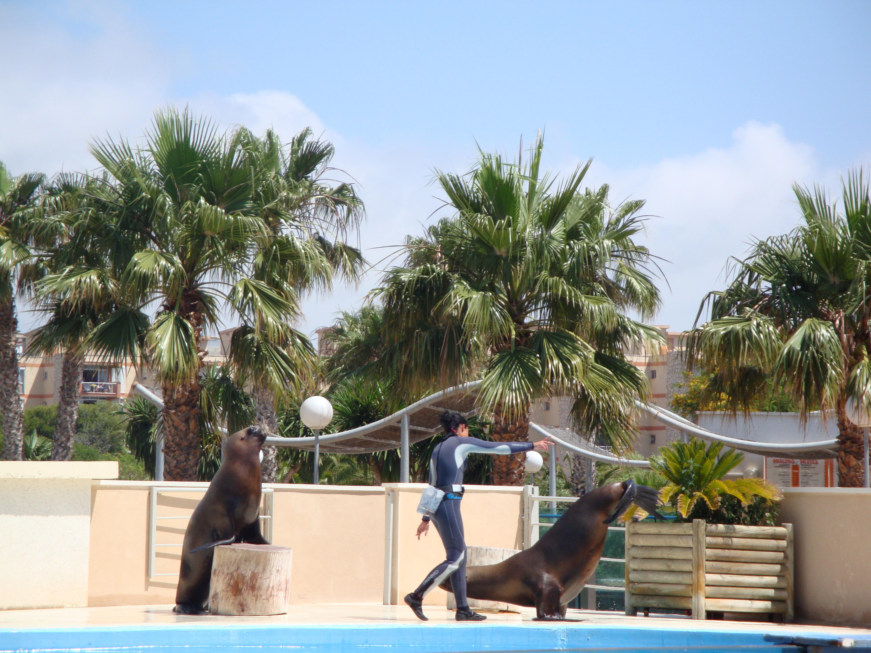 098. Шоу дельфинов и морских львов - Aquópolis, La Pineda