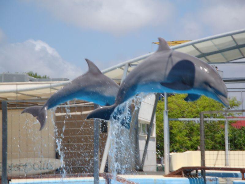 100. Дельфины - Aquópolis, La Pineda
