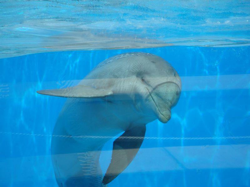 101. Привет, Дельфин - В Aquópolis находится первый в Европе дельфинарий с прозрачными стенками!