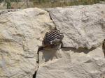 013. Улей, вероятно, сделанный осами - Пляж Плакиас, Южный Крит