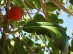"""061. Оранжевый «фрукт» - Отель системы """"time share"""" у пляжа Дамнони, Южный Крит"""